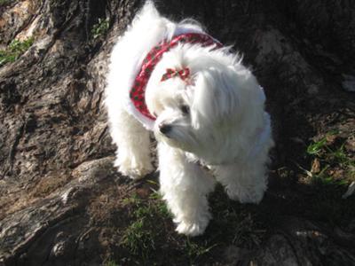 Sissy's profile shot