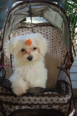 Zoe in her stroller.