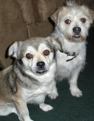 Wolfie (L) and Rusty (R)