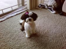 roxy after her first hair cut