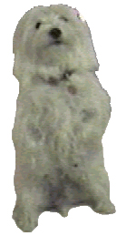 Woofen, an International Terrierist