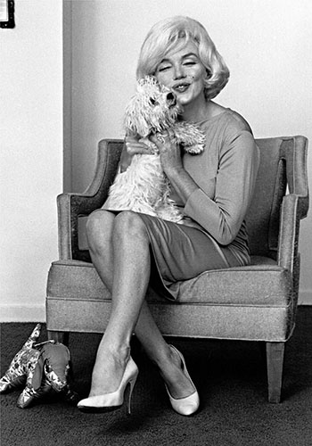 Marilyn Monroe's Maltese dog