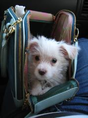 In his Juicy Couture Bag