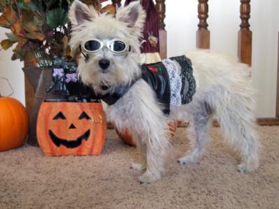 Halloween Muffit