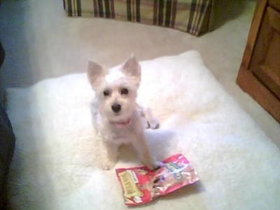 Sadie stealing her treat bag