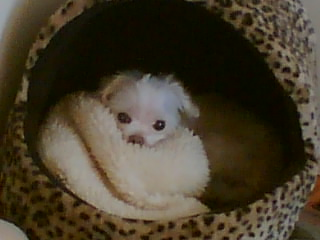 Muffy in her basket
