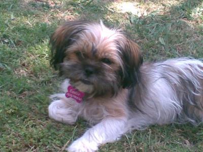 4 month Papitese, Codie