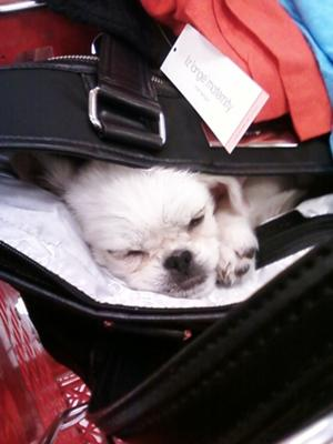 she was so tiny she fit n my purse 11/2010
