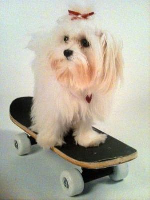 On her skate board!
