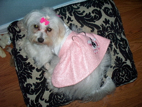 Lacy in a poodle skirt