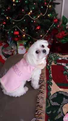 New Princess Coat Christmas 2013