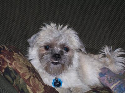 Adopt A Dog Massachusetts For Cheap