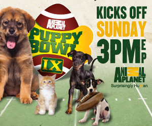 Puppy Bowl 2013