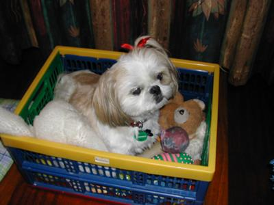 Cindy in her toy box
