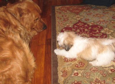 Max & Coco