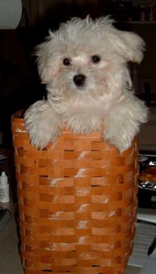 FLOYD IN A BASKET