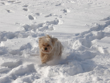 Pelusa Loves the Snow!