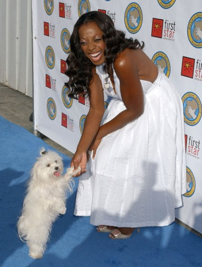 Star Jones Maltese dog