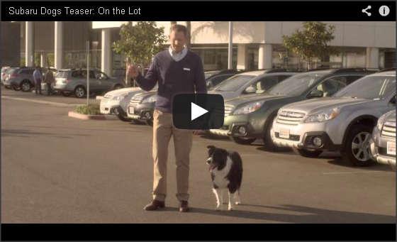 Subaru Dog Tested Video