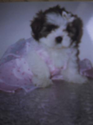 Treasure at seven weeks old
