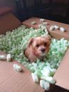 Fun time in the box