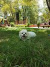 Calvin in a park