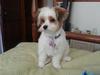 Lexi - 7 mos - 1st haircut