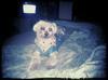 My Baby Brutus