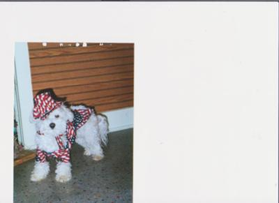 Ruffie II in his Uncle Sam's costume