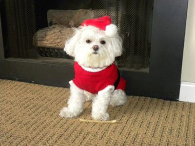 Stylo Clause the Maltese