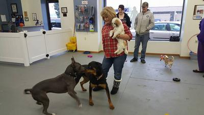 Kathy, please protect me from those big dogs!