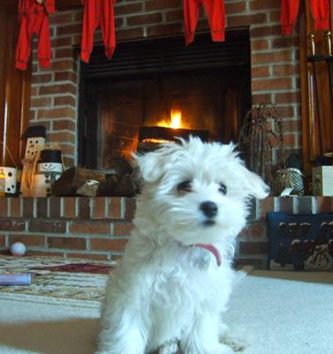 Colie's 1st Christmas