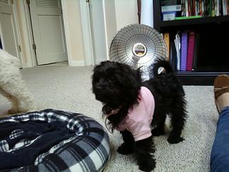her spoiled princess shirt