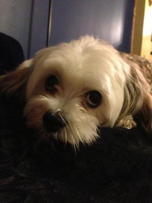My son (my dog) Ricky