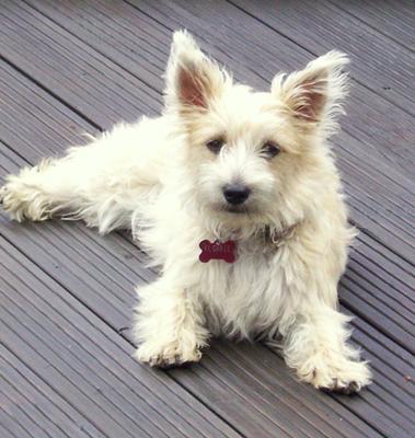 Cairmal Puppy - Florrie