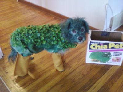 Jasper the Chia Pet