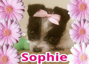 Sophie 13 weeks old 1.5 lbs