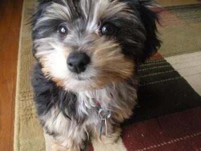 Bailey, 3 months