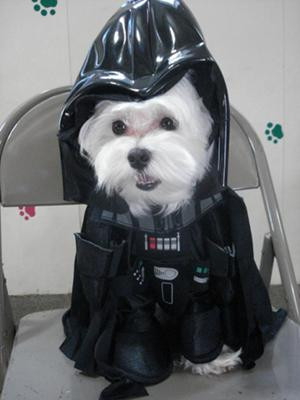 McDreamy as McVader! I mean, Darth Vader!