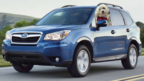 Subaru Forester for dogs