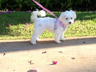 Sofi's first walk outside after all her shots at 17 weeks.