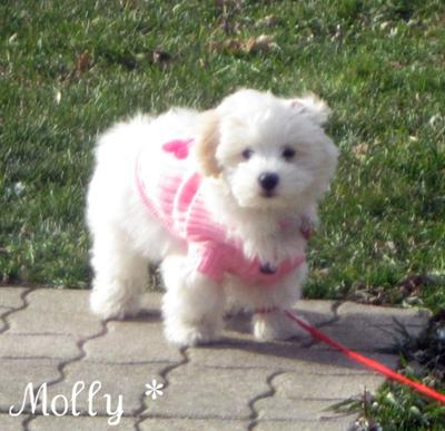 Molly playing outside in her favourite pink sweater :)