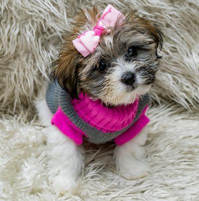Meet Sophie our little princess.