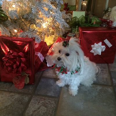 Did Santa Come To See Me Too?
