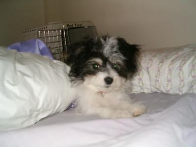 Bailey at around 3 months