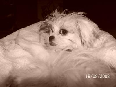 Bijoux, the movie star