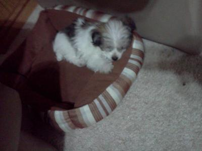 Axel sleeping in his bed