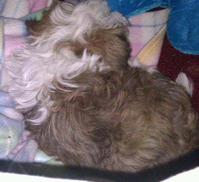 cuddlez