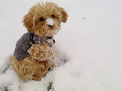 First time in the snow!