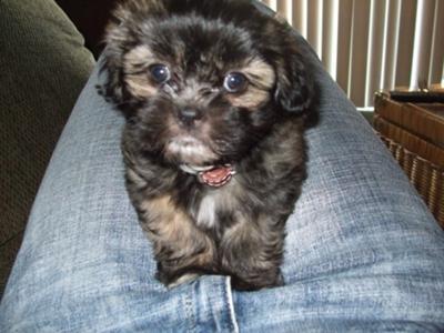 Cute little Cocoa